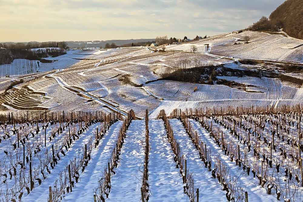 Vignoble du Jura